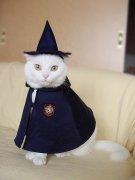 我是从魔法学校毕业