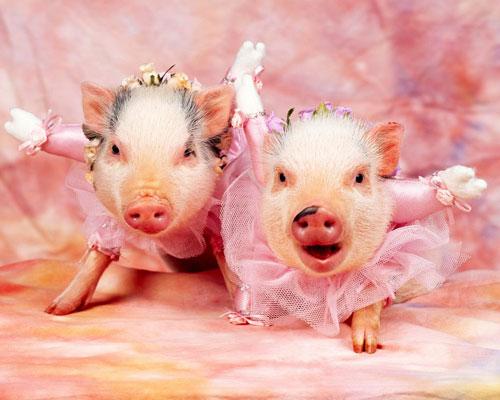 小猪、狗狗拍写真